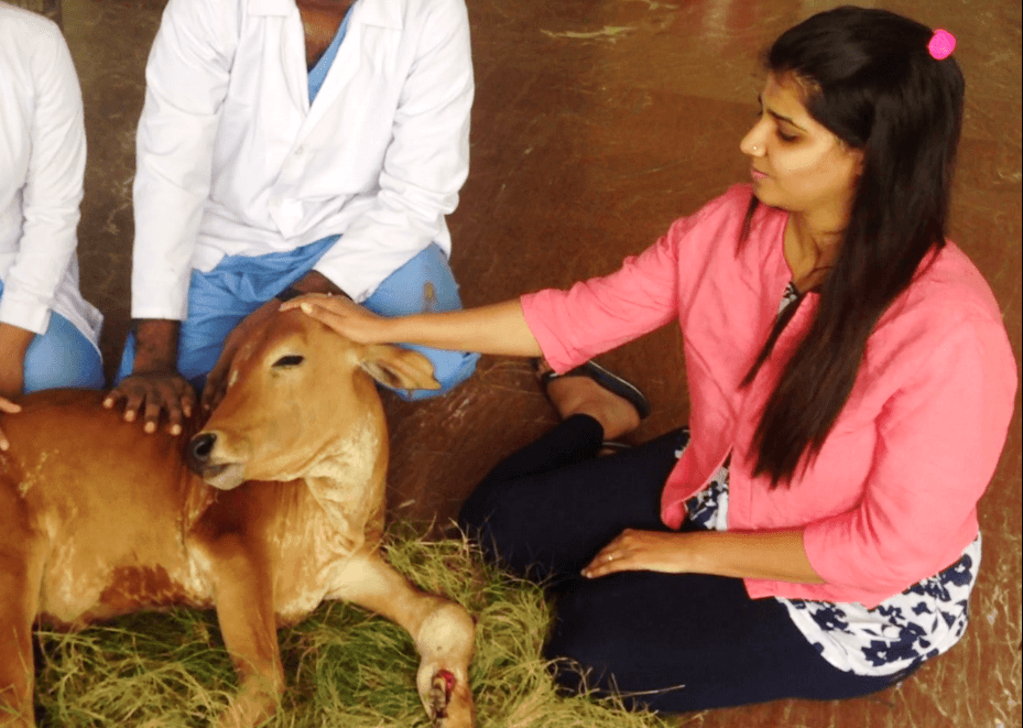 Suchitra-S-Rao-with-a-rescued--Calf-undergoing-treatment